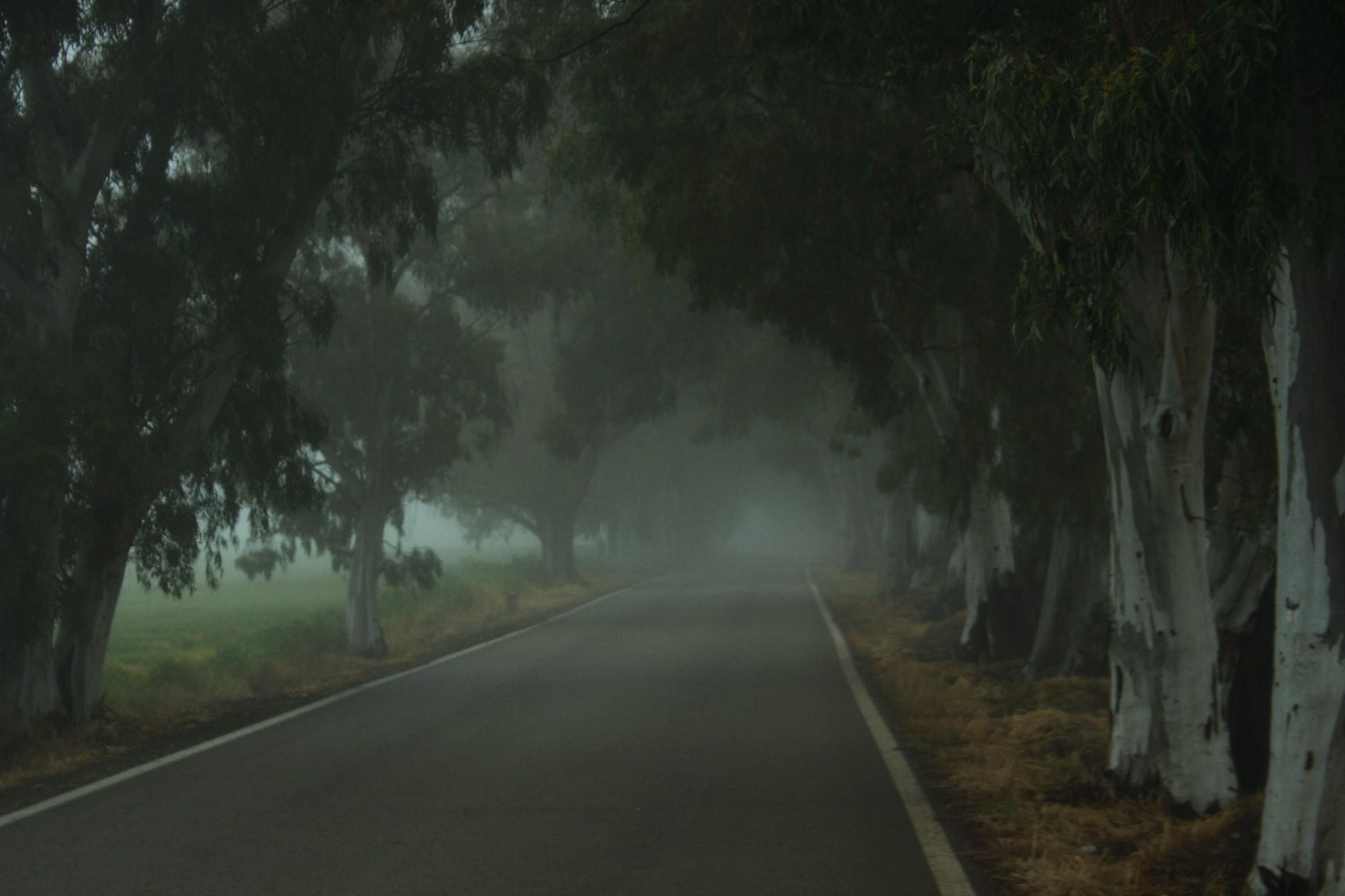campillos-carretera-en-niebla