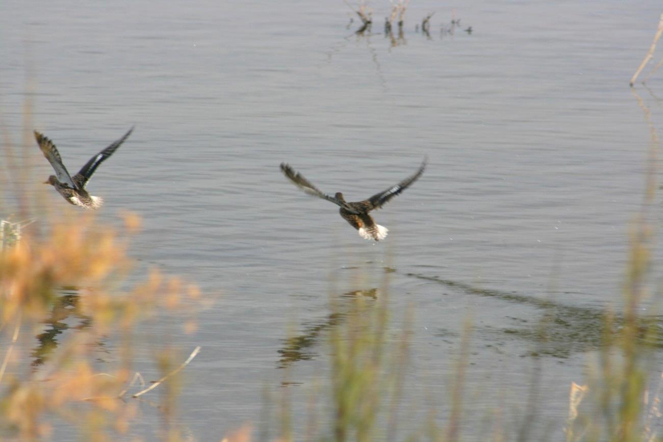 Laguna Dulce